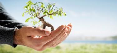 Ekologia, a produkcja mebli