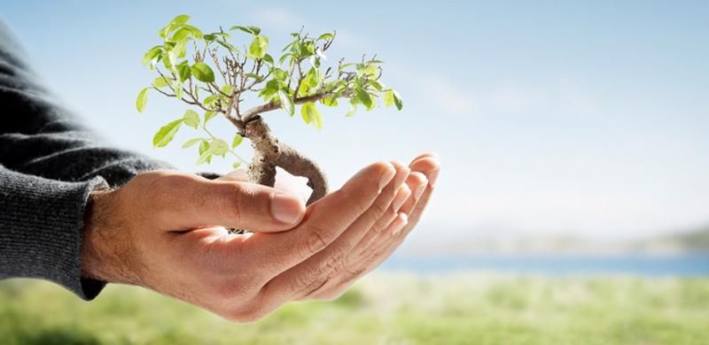 ekologia, rosnące drzewko